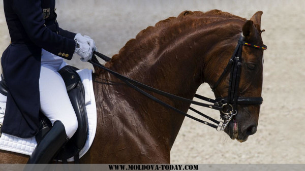HorseDressage_20120806