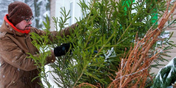 Moscow residents bring Christmas trees to Bitsa Park for recycling